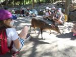 Varios niños durante un campamento de verano (Archivo)