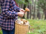 Estos son algunos de los mejores lugares para la recogida de setas en Cantabria